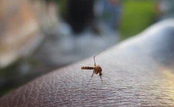 Mückenschutzmittel WDR Servicezeit